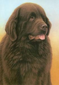just dogs - brown newfoundland - mounted