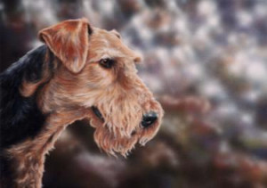 airedale terrier - print only