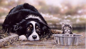 Collie Troubles - Print