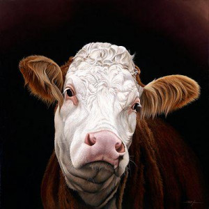 Madge - Pedigree Simmental Cow - Mounted