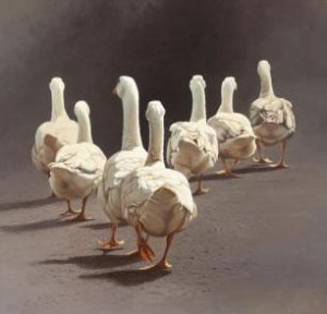 The Magnificent Seven - Ducks - Mounted