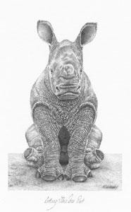 Sitting This One Out - Rhino - Mounted