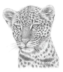 leopard study - mounted
