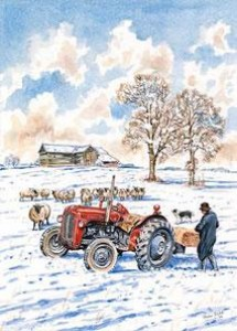 Feeding Sheep At Black Barn, Bures St. Mary - Print