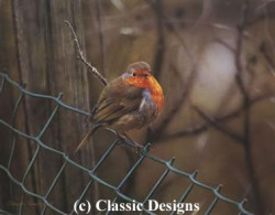 Sitting On The Fence - Robin