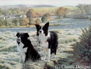 best friends - border collies - mounted
