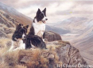 bill & ben - border collies - mounted