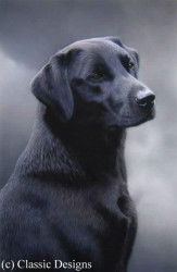 Loyalty - Black Labrador