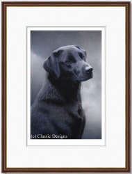 Loyalty - Black Labrador (Framed)