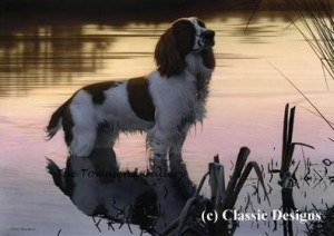 jasper (springer spaniel) - canvas - box canvas