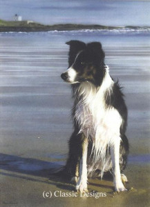 waiting for stan (border collie) - print