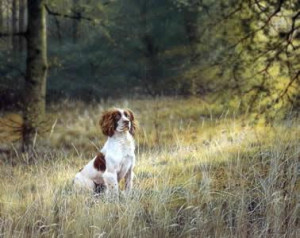 awaiting orders - springer spaniel - mounted