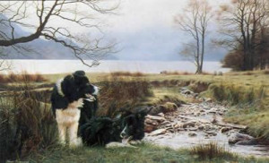 working pair - border collies - mounted