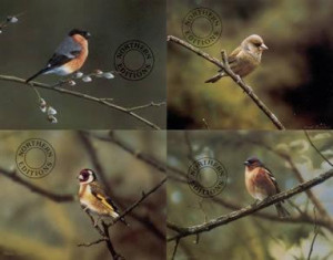 finches - set of 4 - print
