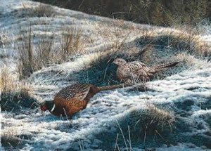pheasants - first fall - print