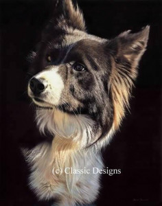 Tommy (Border Collie) - Box Canvas