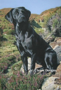 tribute to moses (black labrador) - box canvas