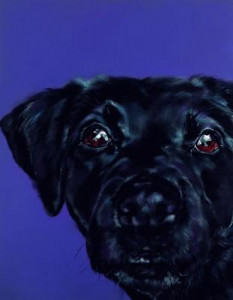 bright eyed - black labrador - box canvas