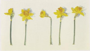 Narcissi - Mounted