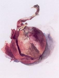 red onion - mounted
