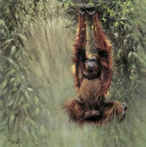 Swinging Borneo - Orangutan - Mounted