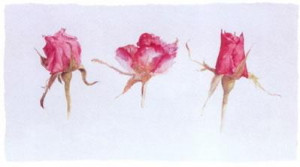 Rose Bud Trio - Mounted