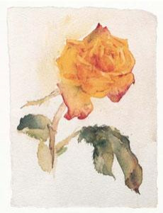 Yellow Rose - Mounted