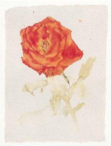 Orange Rose - Mounted