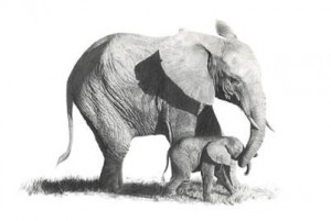 first steps- elephants - mounted