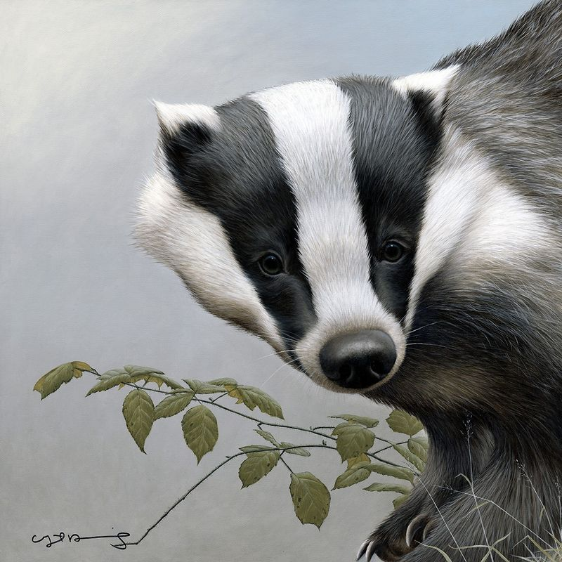Badger - British Wildlife Series - Original - Framed by Nigel Hemming