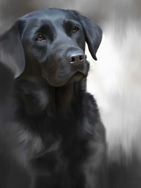Black Labrador (40th Anniversary Image) - Framed