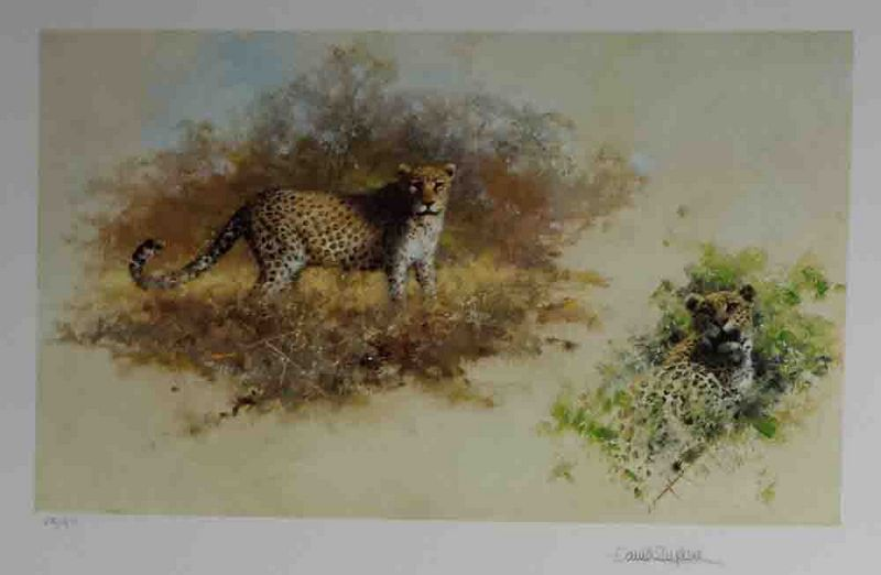 Leopards - Print only by David Shepherd