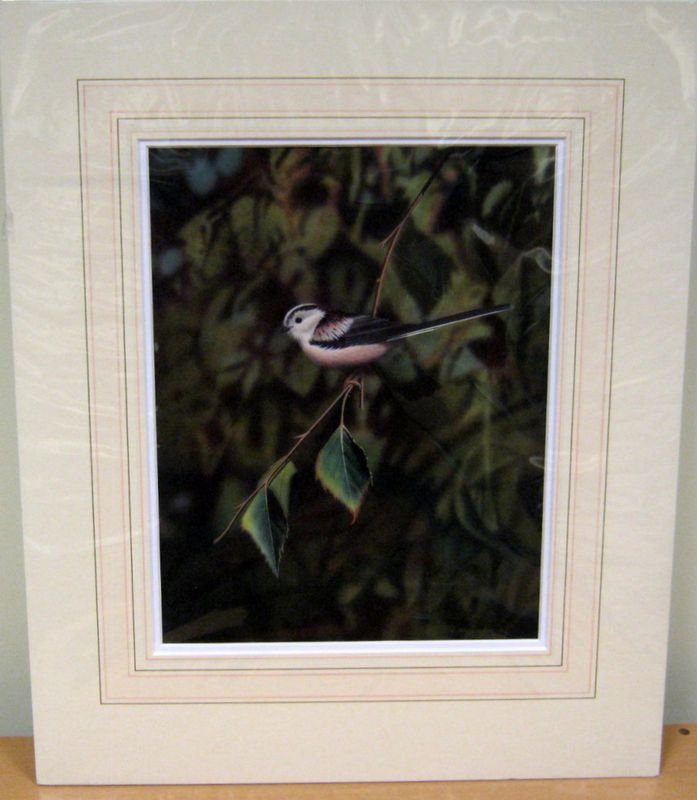 Long-Tailed Tit - Original by George Pickering