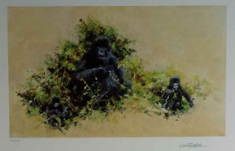 Mountain Gorilla - Print only by David Shepherd