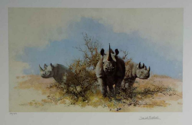 Rhino - Print only by David Shepherd