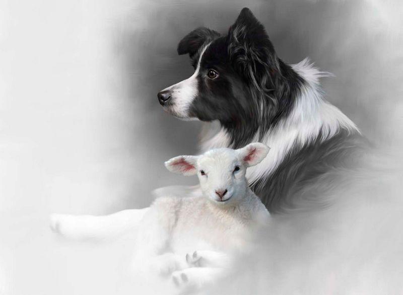 Shepherds Delight - Original Edition by Nigel Hemming