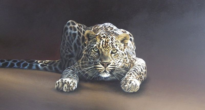 Spotted - Canvas - Box Canvas by Paul James