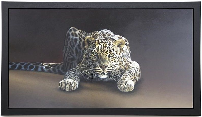 Spotted - Canvas - Framed Box Canvas by Paul James
