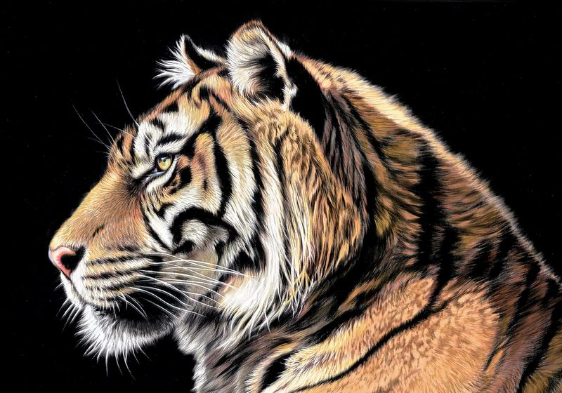 The Wild Side II - Box Canvas by Darryn Eggleton