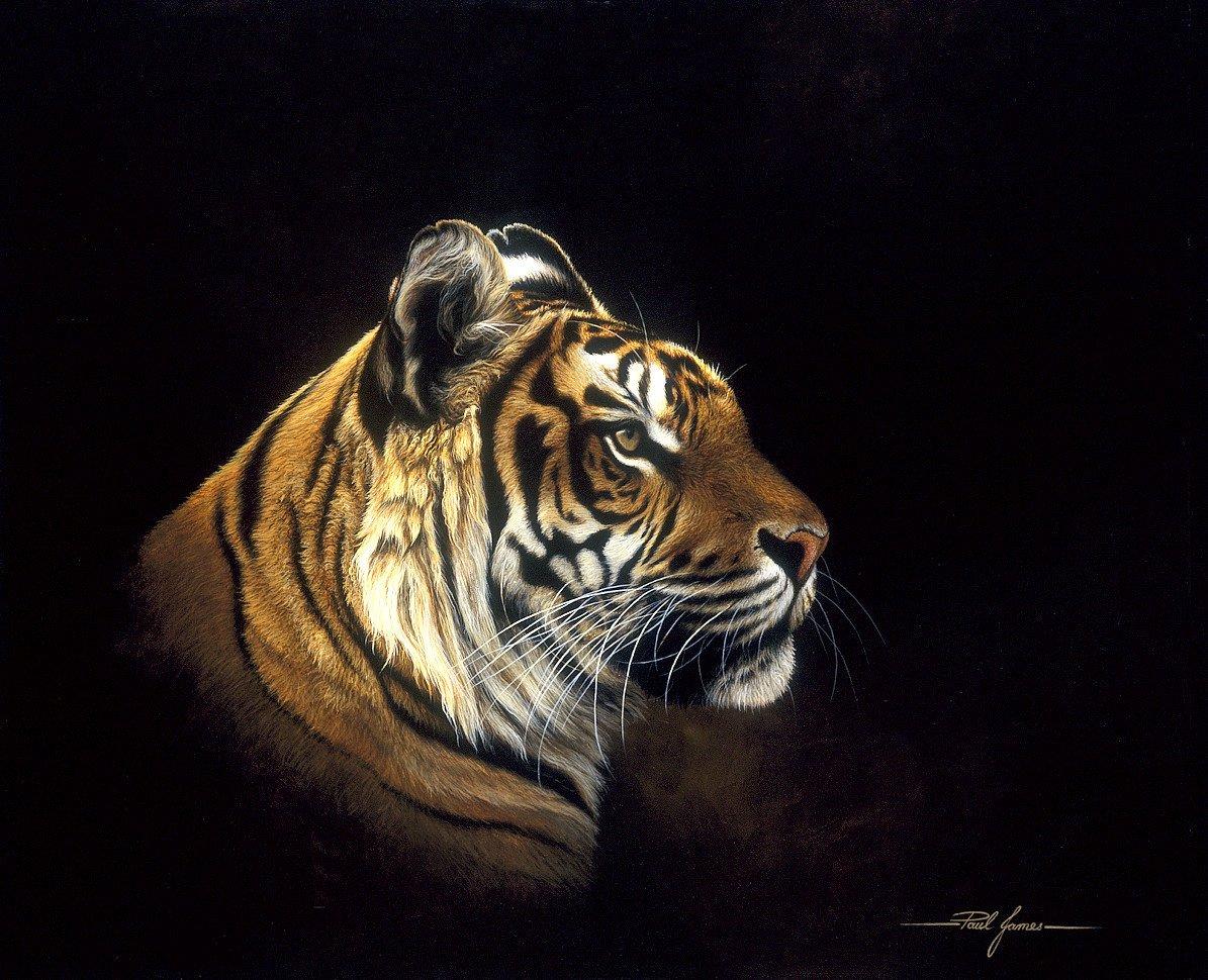Tiger Profile - Mounted