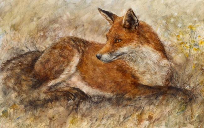 Red Fox Waiting