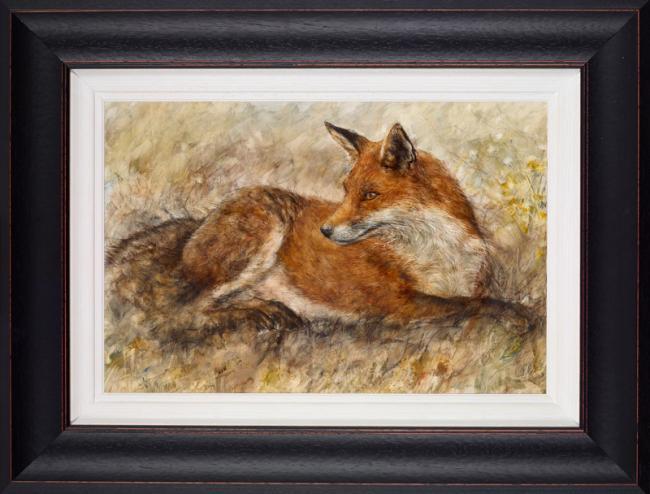 Red Fox Waiting - Framed