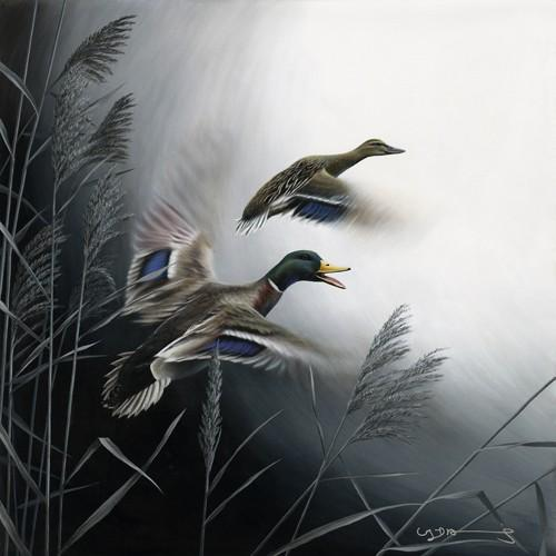 In Flight - Mallard Ducks