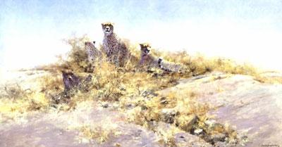 The Cheetahs Of Namibia by David Shepherd