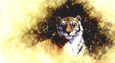 Working Sketch For A Painting Of A Tiger by David Shepherd