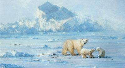 Polar Bear Country by David Shepherd