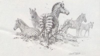 Zebra (Pencil) by David Shepherd