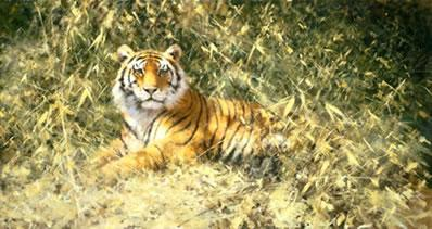 The Ranthambore Tiger by David Shepherd