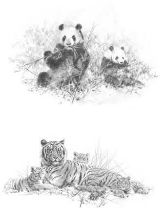 Portfolio Set II - Pandas & Tigers (Set of 2) - Mounted by David Shepherd