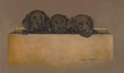 Chocolate Box by Debbie Gillingham